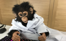 A chimpanzee in a white coat types at a keyboard lit by glowing LEDs.