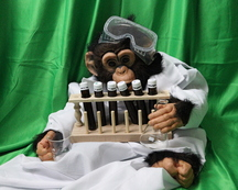 A chimpanzee in a lab coat and goggles holds a beaker and flask next to a rack of test tubes.